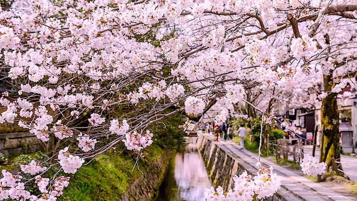 marayama park day trips from tokyo to kyotot