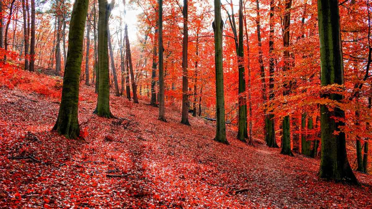 best places to visit in October in Europe Sonian forest Belgium