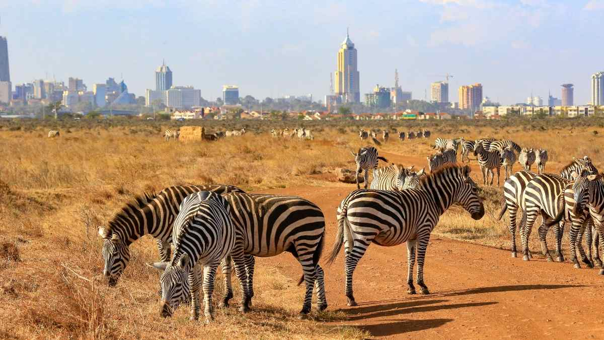 living in nairobi kenya as an expat cover
