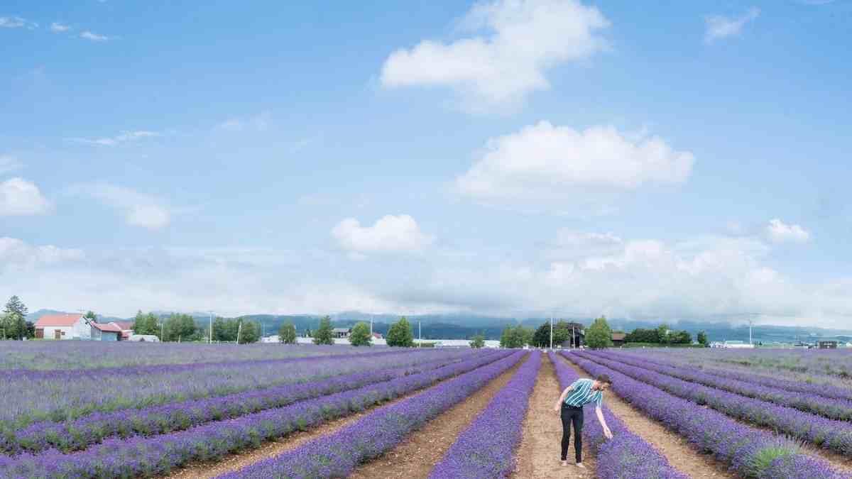 hokkaido lavender fields things to do in japan bucket list