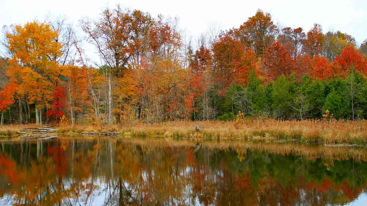 fall foliage in the poconos
