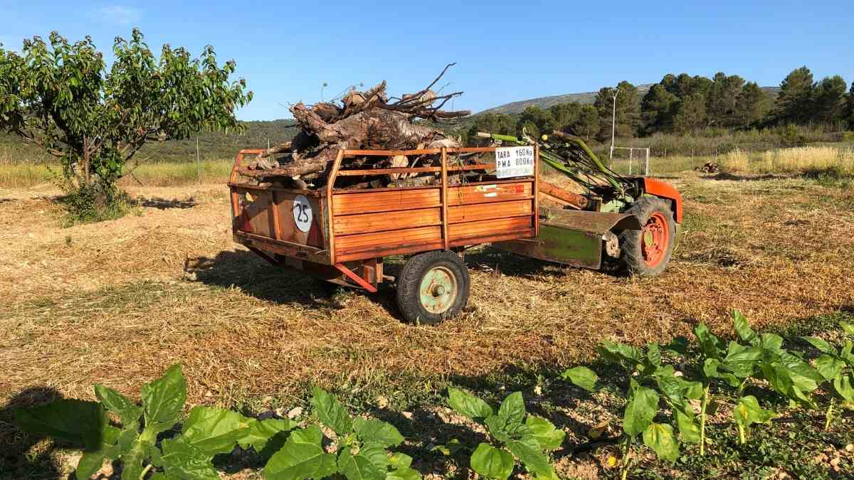 collecting wood moving to spain